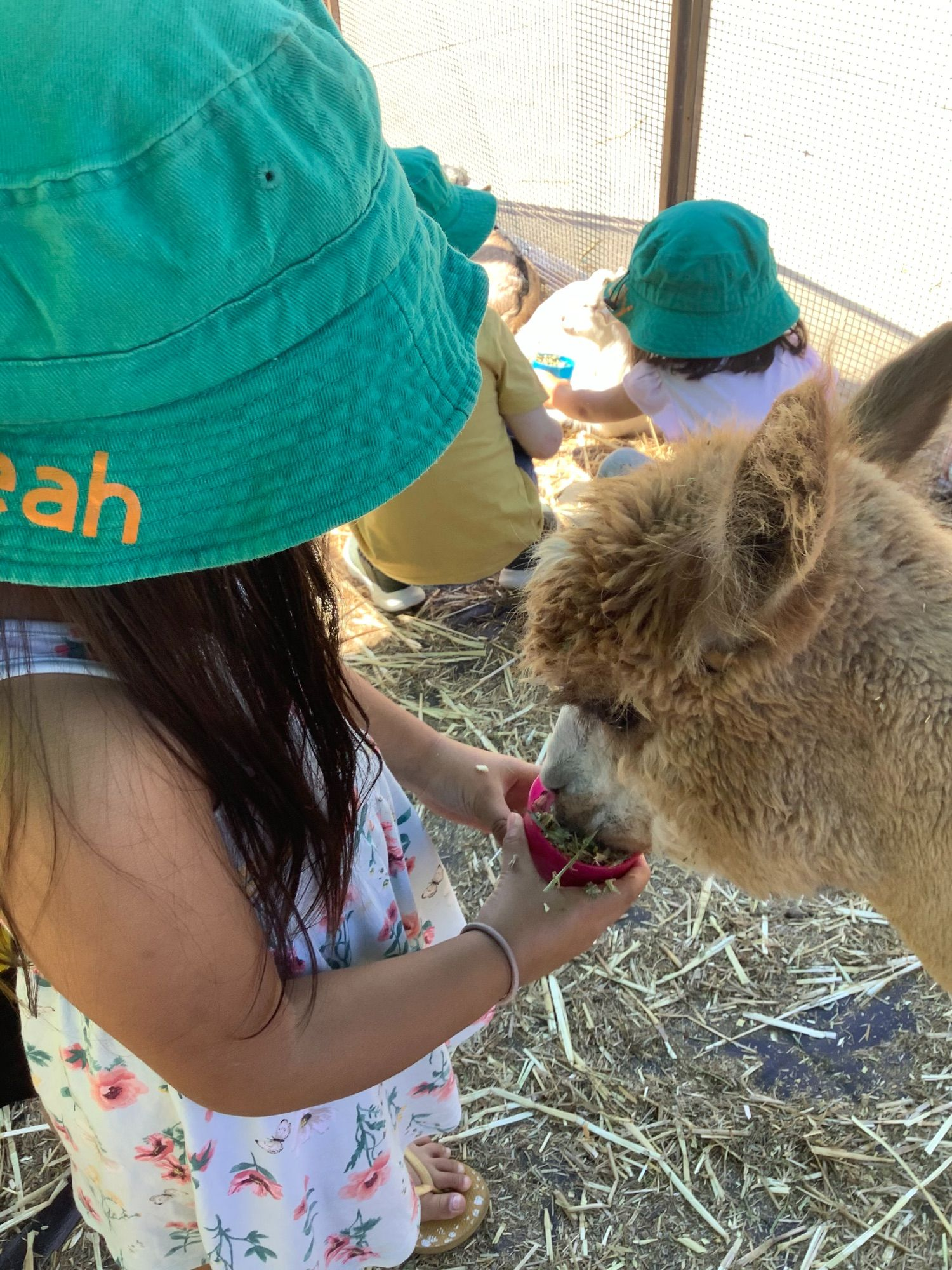 As yesterday was National pet day, we decided to celebrate here at Creative Minds Pimpama. The children were so excited to interact, pat, feed & brush a variety of baby animals from Old MacDonald's Farm. Educators & children look forward to extending on this throughout the week with a strong link to outcome two of […]